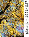 もみじ(根香寺) 19214887