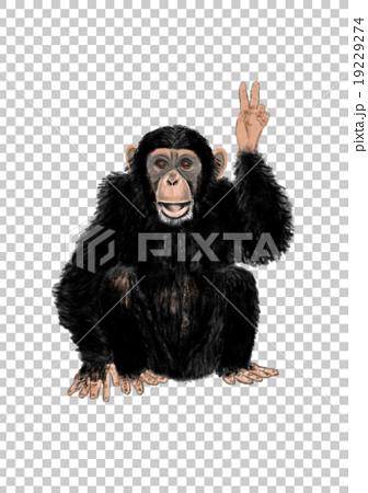 和平標誌黑猩猩 19229274