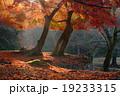 東大寺 僧坊跡 秋の写真 19233315