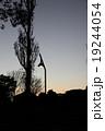 樹木 19244054