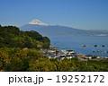 みかん畑 富士山 冠雪の写真 19252172