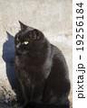 黒猫 19256184