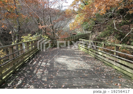 森林鉄道風歩道橋』岩船峡、ほしだ園地、大阪府民の森、クロンド園地 19256417