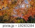 愛知県民の森の紅葉 19263284