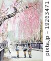 角館 枝垂桜の水彩画 19263471