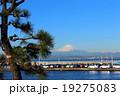 松と富士山 19275083