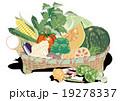 新鮮野菜盛り 19278337