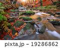 秋 川 樹木の写真 19286862