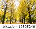 【東京都】光が丘公園のイチョウ並木 19305249