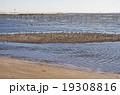 三番瀬と鳥たち 19308816