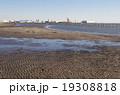 干潮の三番瀬海岸 19308818