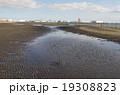 三番瀬の干潮 19308823