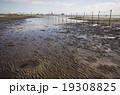 東京湾 三番瀬の干潟 19308825