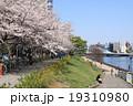 桜 永代橋 隅田川テラスの写真 19310980