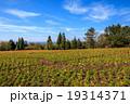 ポピー畑 19314371