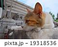 遠くを見る猫 19318536