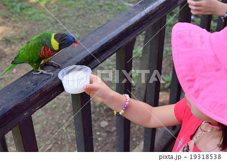 鳥に餌をやる少女 19318538