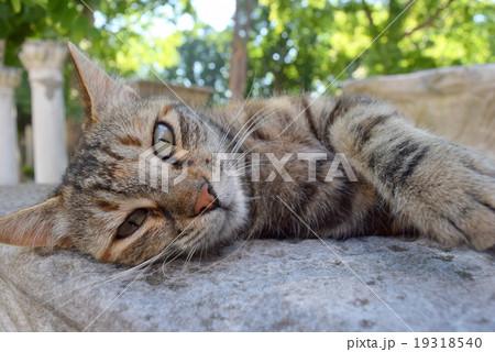 猫 19318540
