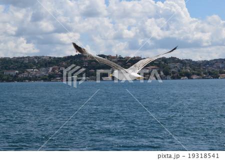 ボスポラス海峡を飛ぶカモメ 19318541