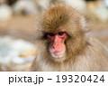 Snow monkey,nagano,japan(長野県地獄谷野猿公園の雪猿スノーモンキー) 19320424