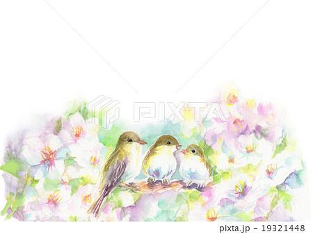 桜とメジロ 19321448