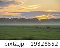 鹿 朝焼け 朝もやの写真 19328552