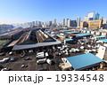 築地 築地市場 魚市場の写真 19334548