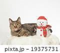 お座りした猫とスノーマンのおもちゃ 19375731