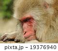 地獄谷の猿 19376940