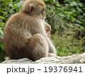 地獄谷の猿 19376941
