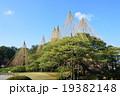 兼六園の「雪つり」(石川県金沢市) 19382148