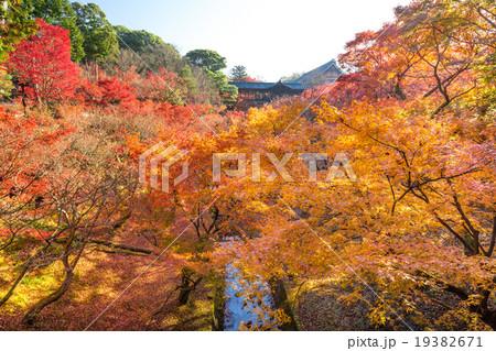 秋の東福寺 19382671