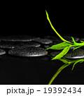 青竹 きれい 綺麗の写真 19392434