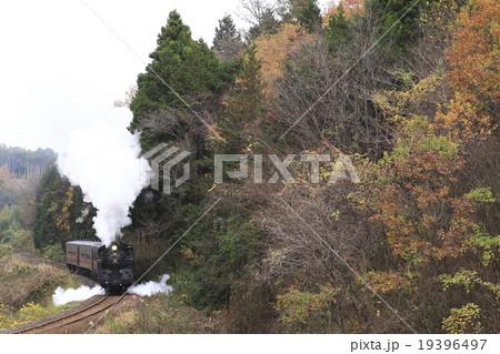 紅葉の真岡鉄道SL 19396497