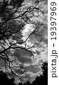 枯れ木と雲 19397969