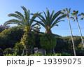 伊豆高原ステンドグラス美術館前のヤシの木 19399075