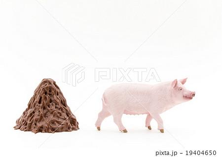 メス豚とメス豚のフン山盛り: Pig and its feces 19404650