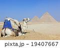 ギザのピラミッドとラクダ 19407667