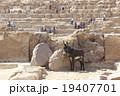 ギザのピラミッドとロバ 19407701