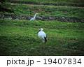 コウノトリとサギ 19407834
