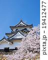 彦根城と桜 19412477
