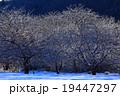 冬景色 木 自然の写真 19447297