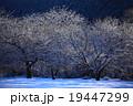 冬景色 木 自然の写真 19447299