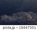 冬景色 木 自然の写真 19447301