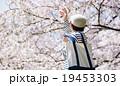 桜シーズン 19453303
