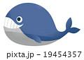 クジラ 19454357