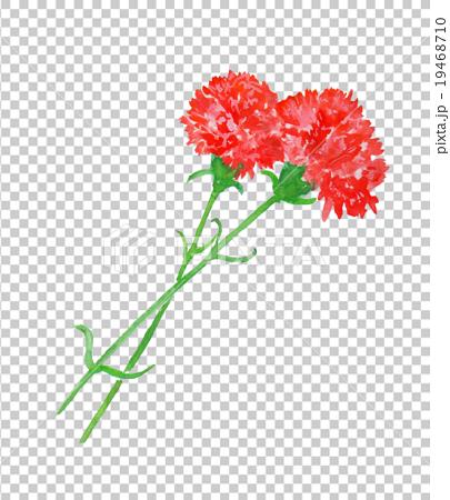 母親節康乃馨水彩插圖插圖手繪手寫花禮物花束愛伊麗莎白 19468710