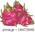 ドラゴンフルーツ 19473696