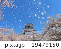 桜吹雪と鶴ヶ城 19479150