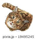 ねこ ネコ 猫のイラスト 19495245
